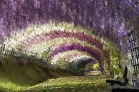 Сад Кавати Фудзи, Япония