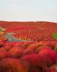 Осень в Национальном парке Хитачи, Япония