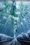 Снег в бамбуковом лесу, Киото, Япония