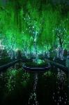 Магический лес, Шанхай, Китай